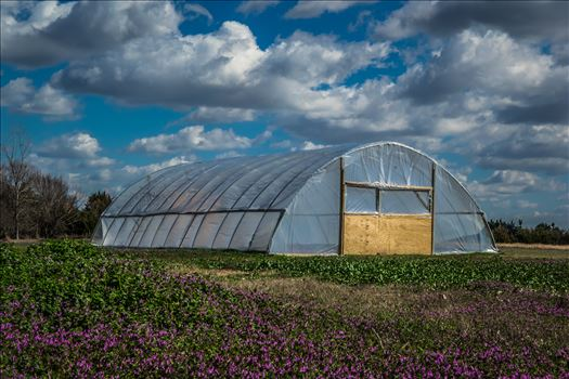Hungry Boy Farms Spring 2017 - Taken at the beginning of spring 2017 at Hungry Boy Farms, Bonham Texas.